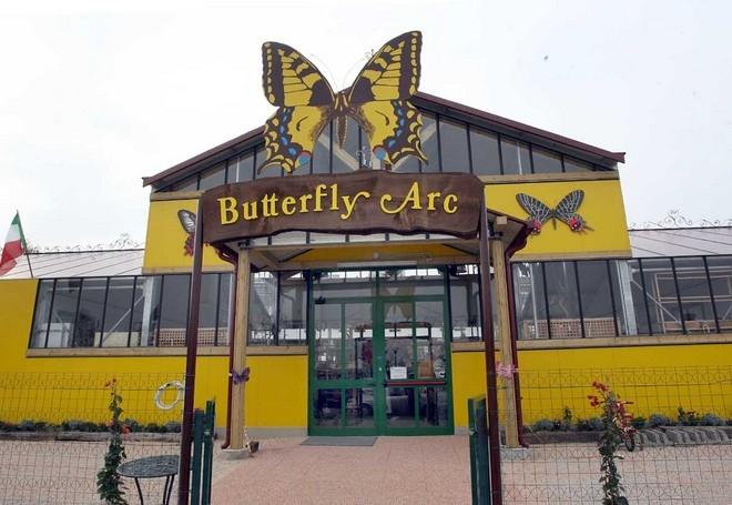 бабочки абано