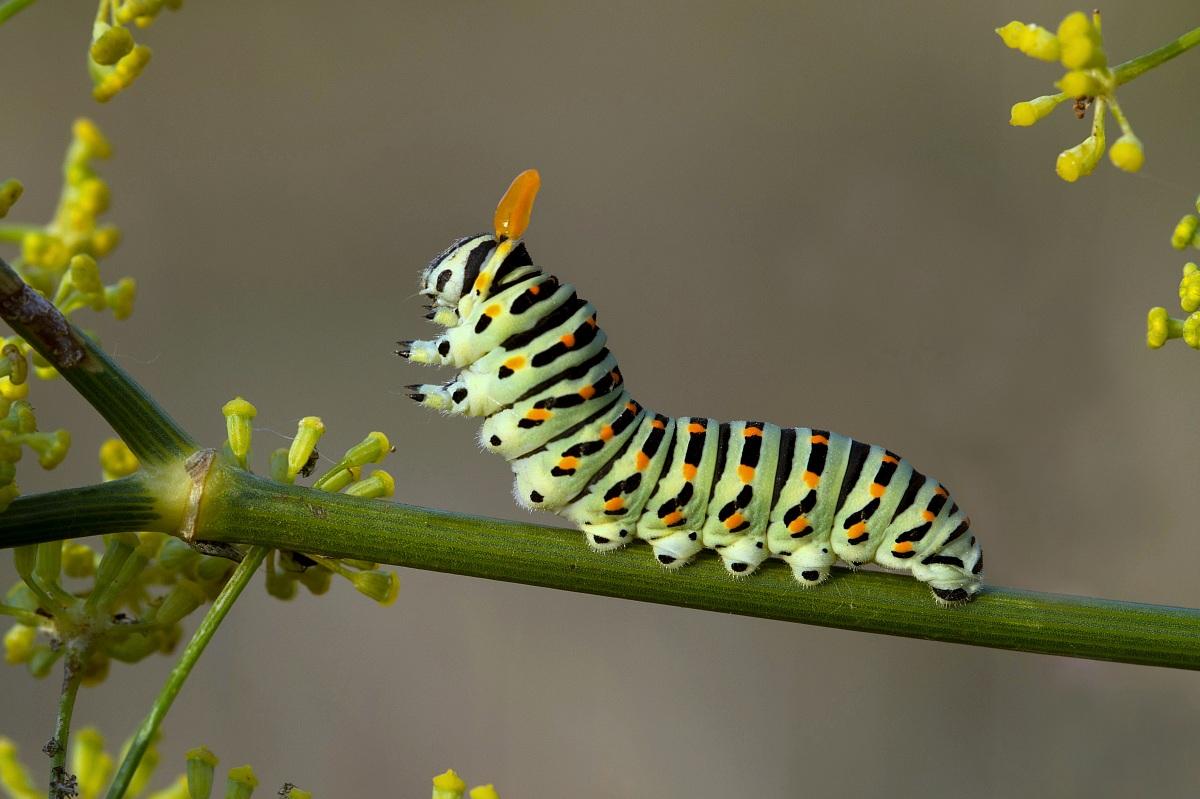 бабочки абано3