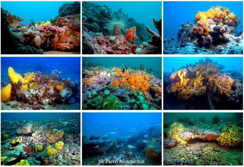 Кьоджа Италия Достопримечательности Дайвинг Адриатическое море Природный Заповедник